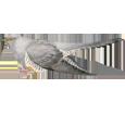 Cuckoo ##STADE## - plumages 52