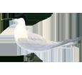 Sandwich Tern ##STADE## - plumages 5