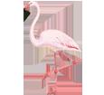 Flamingo ##STADE## - plumages 68