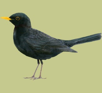 Take in a blackbird species bird
