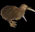 Kiwi ##STADE## - plumages 52
