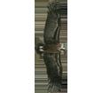 Vulture ##STADE## - plumages 51